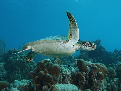Marine Biologists Study Communication and Mutualism